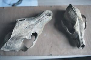 Найдено десятки черепов киевских собак XVII века