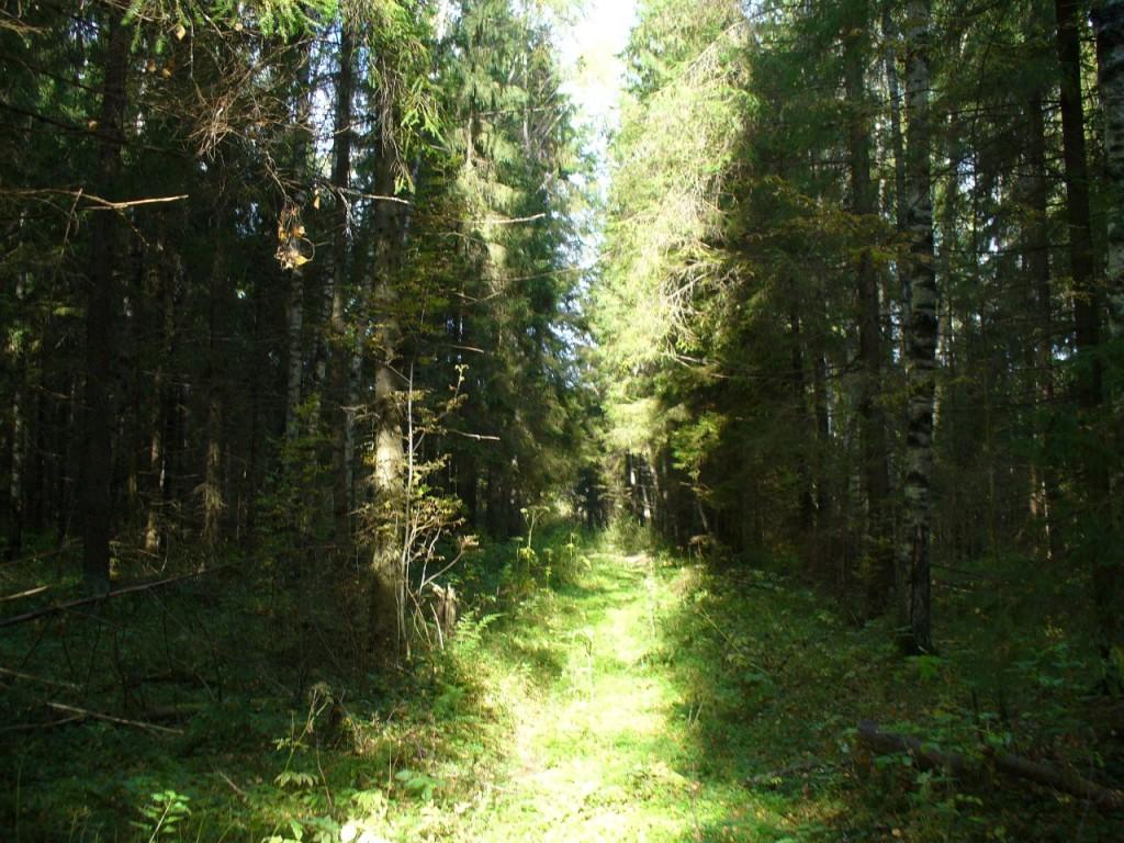 Старая лесная дорога